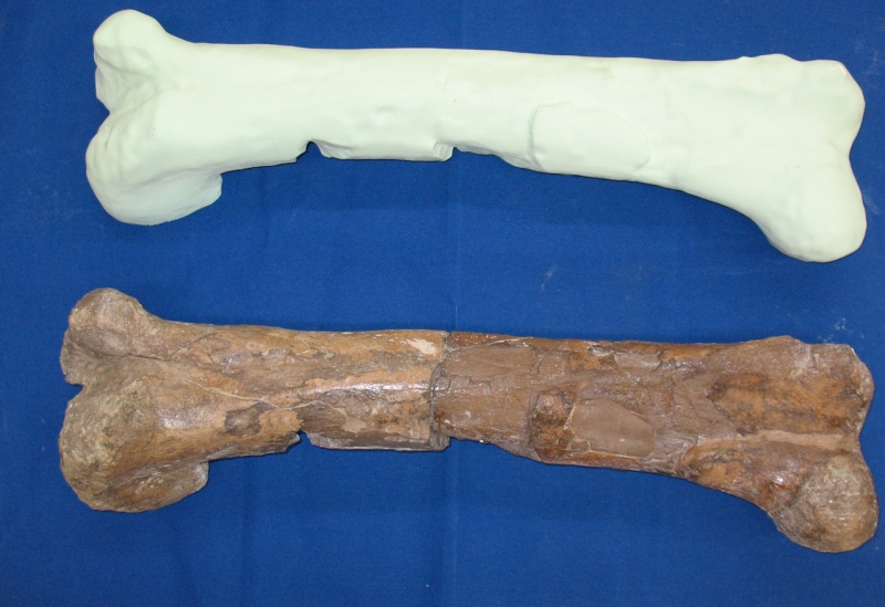 Dinosaur bone and 3D Printed model from 3D scan data
